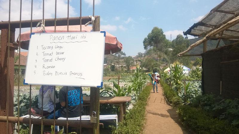 Kebun Sayuran Taman Begonia