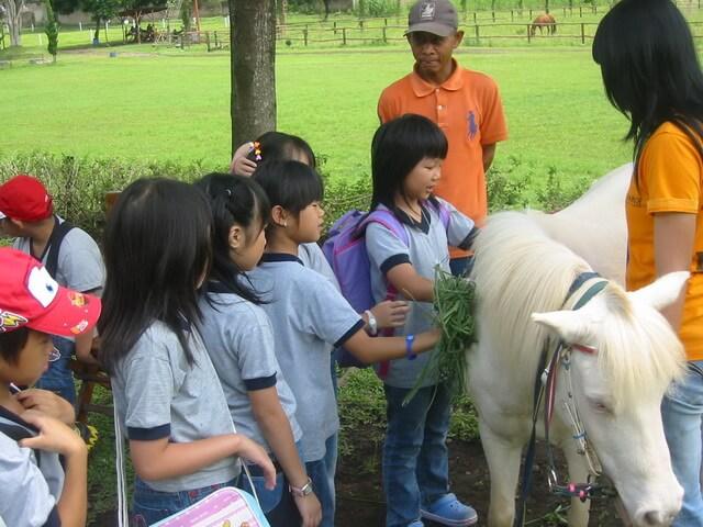 wisata anak merawat kuda